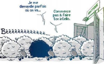 dessin moutons.jpg